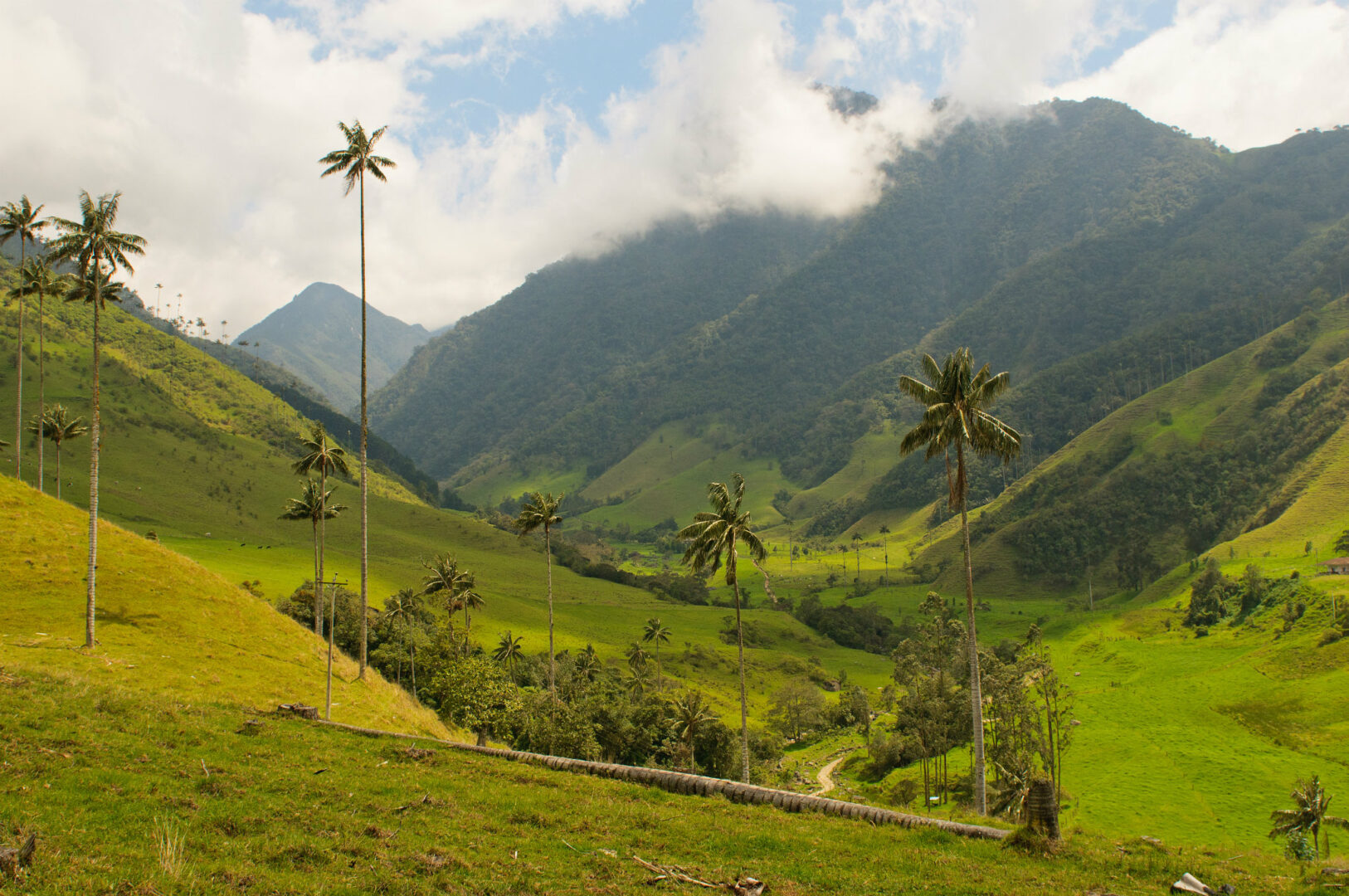 Colombie-Sur-La-Route-Cocora-Valley